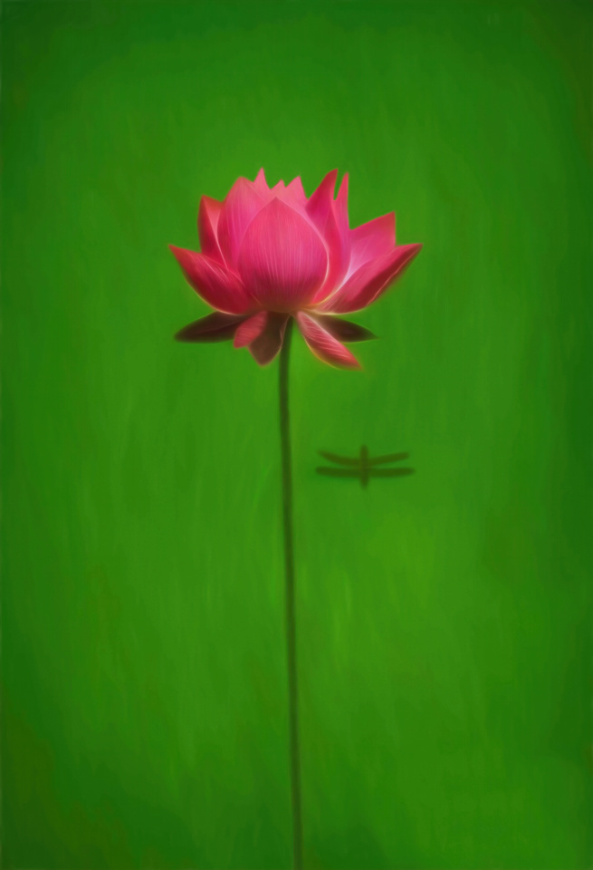 Pink Water Lily with Dragonfly